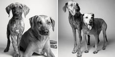 Dogs in particular age faster than us.Amanda Jones has dedicated her past 20 years to an incredible photography project which shows how our beloved pets get older. Check out the amazing work of Amanda in this post below : Corbet— 2years and 11years Image Source - Dog Years Briscoe— 1…