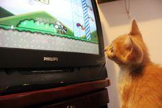 Fred assistindo TV! Mais: http://www.blogcoisaetal.com/2015/11/diariodoreamor.html#.VlO0fvmrTIU