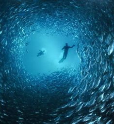 Underwater sea life and scuba diving is peaceful.