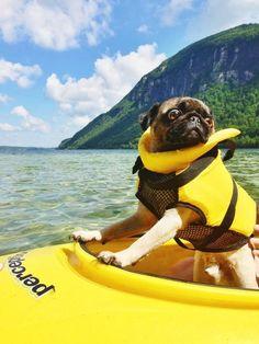 Pug...livin the life!