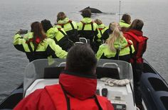 #WhaleWatching in #Iceland #GoIceland #CarRentalIceland #IcelandCarHire