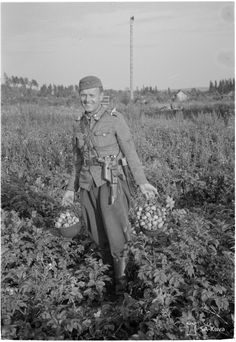 A Finnish soldier with two helmetfuls of potatoes, 14 August 1941.