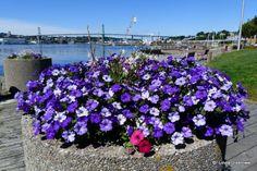 Halifax Harbour delight