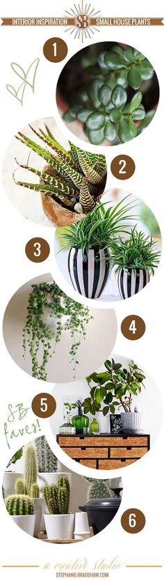 Interior Inspiration    Hard to Kill House Plants