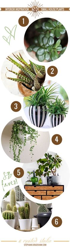 Interior Inspiration || Hard to Kill House Plants