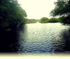 Pantanos en Paraiso, Tabasco, flora y fauna silvestre