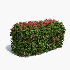 Jungle Geranium Hedge Flowering 3d max 3d model / 3д модель растения куста живой изгороди с цветами hedge plants box shrub flowers garden pruned topiary park screen bush nature foliage leaf landscape tree visualization exterior branch 3d green ixora coccinea