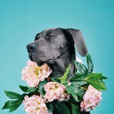 Flores en todo incluso la bella mascota esta encantada con su collar floral