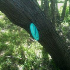 Disc golf ninja!