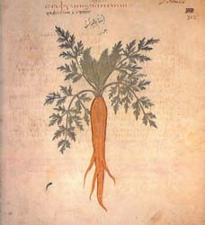 Illustrations of Carrots in Ancient Manuscripts or Early Printed Books. European herbal medicine is rooted in the works of classical writers such as Pliny the Elder who wrote Historia Naturalis (here); and Dioscorides (here), a Greek physician and author of the first known illustrated guide to medicinal plants whose De Materia Medica (78 C. E.) formed the basis of herbals in Europe for 1,500 years and the most influential herbal of all time.