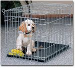 How to Choose a Wire Kennel or Plastic Crate for Your Dog