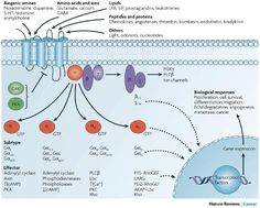 Diversity and importance of GPCRs