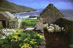 NOT A BAAAAAAAAAAD VIEW!  We're on An Cró Mór here, the highest point of County Kerry's Great Blasket Island.  An Cró Mór means 'the big sheep pen' which is ironic because nowadays, the stone ruins often double up as sheep pens.  It's an appropriate use for the tumbledown cottages and barns of a once vibrant community which stand as a wistful reminder of a time gone by when life, though tough, was simpler.  (M) <3  Pic.  photographer not recorded at source, apologies, ownership welcome.