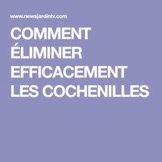 COMMENT ÉLIMINER EFFICACEMENT LES COCHENILLES