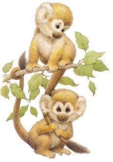 Cartoon Monkey Clip Art   Two very cute little monkeys in a tree.
