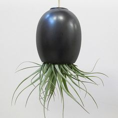 Air Plant Pod Large Gunmetal, $34, now featured on Fab.