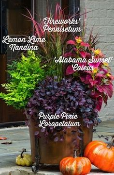 Fall Look Container Recipe | In the Garden | Southern Living Plant Collection