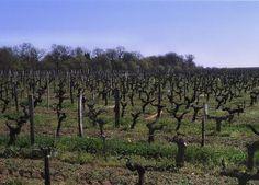 séjour randonnée découverte en pays bergeracois Dordogne Aquitaine