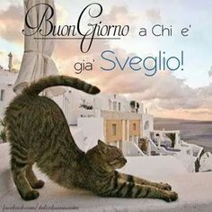 BuonGiorno a chi - 9366 Good Morning Good Night, Day For Night, Good Day, Italian Memes, Happy Smile, Inspirational Thoughts, Animals And Pets, Dog Cat, Humor