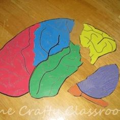 Brain Puzzle {Activities for Kids} A puzzle learning about the different parts of our brain.attach pictures of what happens in each lobeA puzzle learning about the different parts of our brain.attach pictures of what happens in each lobe Human Body Activities, Brain Activities, Activities For Kids, Mindfulness Activities, Classroom Activities, Brain Craft, Brain Science, Life Science, Computer Science