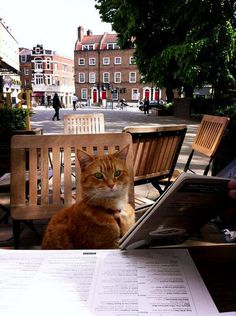 James Bowen & Street Cat Bob  Tuna or not tuna, that is the question? Bob looks over the menu @ lunch with Hodder's @Emilie_Ferguson.