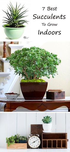 Super Simple Succulents to Grow Indoors Learn about the 7 Best Succulents to Grow Indoors! Pin now, and read laterLearn about the 7 Best Succulents to Grow Indoors! Pin now, and read later Growing Plants Indoors, Herbs Indoors, Growing Herbs, Succulent Gardening, Cacti And Succulents, Planting Succulents, Indoor Gardening, Succulent Landscaping, Succulent Care