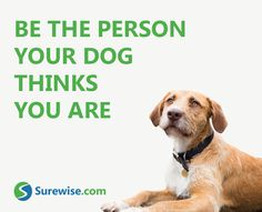Be the person that your Dog thinks you are & insure your best friend with Surewise! #Petinsurance #Surewise #Dog