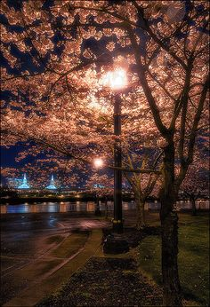 Farewell Spring - Tom McCall Waterfront Park, Portland, Oregon