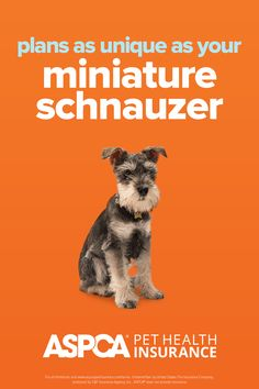 Every breed has different health needs. ASPCA Pet Health Insurance plans were designed with the needs of Mini Schnauzers in mind. Return to your quote today to view customized plan options for your pet. Health Insurance Plans, Pet Insurance, Mini Schnauzer, Miniature Schnauzer, Health Care Coverage, Schnauzers, Be Yourself Quotes, Dog Cat, How To Plan
