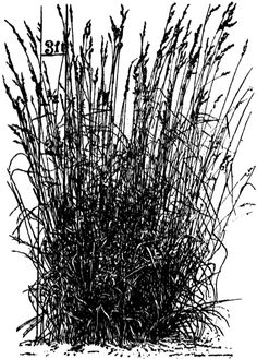 Tall Grass Silhouette Inside Tall Grass Clipart Google Search 50 Best Tall Grass Images On Pinterest Grass Herb And Lawn