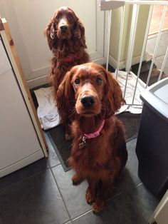 Waiting for our biscuits please