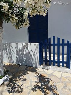 The Greek Summer is white and Blue! Oleander on Antiparos island Greece! Photography by P. Chryss, Creative Social Media Sitter. Feel free to share, please ask me if you want to use it.