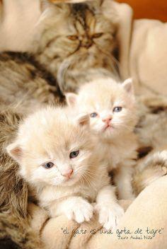kitty cats                .#cats #kitty #kitty_cats #kitteh #feline #pussy_cat