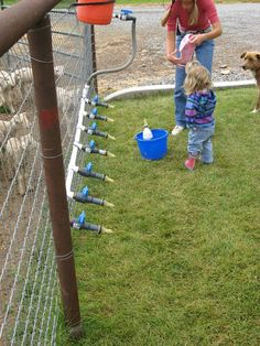 Fancy Meeting Ewe: October 2012 DIY lamb feeder, feeds 7 lambs at one time!