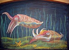 Waldorf ~ 4th grade ~ Human & Animal ~ Cuttlefish ~ chalkboard drawing ~ http://www.waldorf-ideen-pool.de/index.php?aid=2600