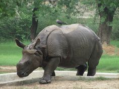 Animal Sanctuaries in Delhi, India @ Sanctuariesindia.com