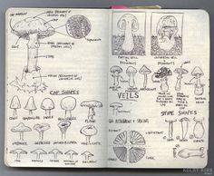 This guy's hiking journal documents his journey as he reaches his goal to have hiked 500 miles in one year. This page is illustrations of mushrooms that he found interesting. I find them interesting as well