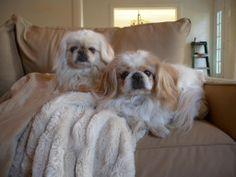 Peekachu and Maddie found their forever home.