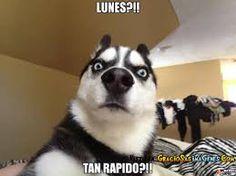 Resultado de imagen para memes de animales en español
