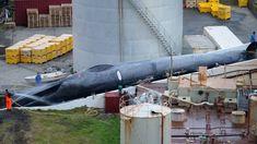 Az izlandi bálnavadászok megölték azt, ami kék bálának tűnik, az egyik legnagyobb lények a bolygón.  A bálnavadászattal szemben támasztott aktivisták fényképészeti bizonyítékai azt mutatják, hogy egy nagy állatot kivágnak.
