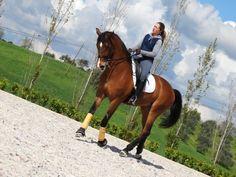 Dressage in Quinta•M #quintam #dressage #equitation #portugal #lusitano #horses