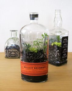 Gardening Indoor Diy: Bottle Terrarium Do-It-Yourself Ideas Garden Ideas - We've all seen photos of a beautiful terrarium with its own miniature ecosystem in a bottle — I decided to …