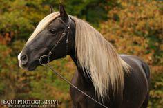 Very pretty horse! Love the color!