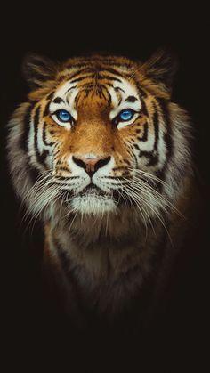 Lovely tiger ✿⊱╮