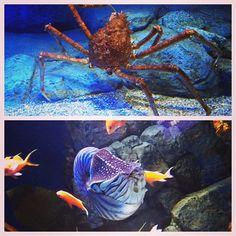 Souvenir de vacances. Singapour. Le plus grand aquarium du monde.