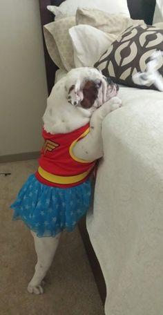 New | A community of Bulldog lovers!