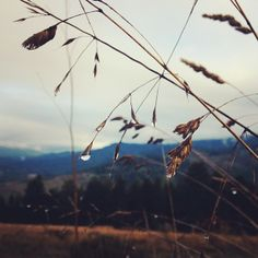 Instagram me @gabriellawotherspoon    #rain #raindrops #winter #grass #detail #macro #iphone #nature #vscocam