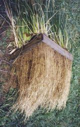 The vetiver system