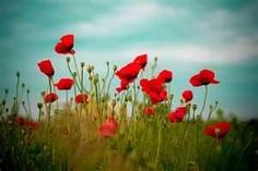 Remembrance Day  Australia     Lest We Forget