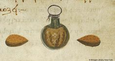 De materia medica, MS M.652 fol. 221r - Images from Medieval and Renaissance Manuscripts - The Morgan Library & Museum